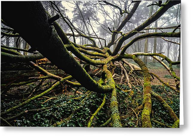 The Fallen Tree I Greeting Card by Marco Oliveira