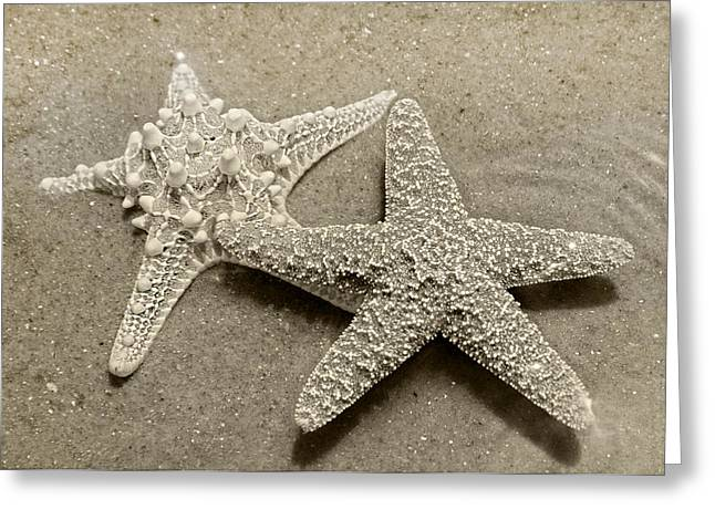 The Family Asteriidae Greeting Card by Betsy Knapp