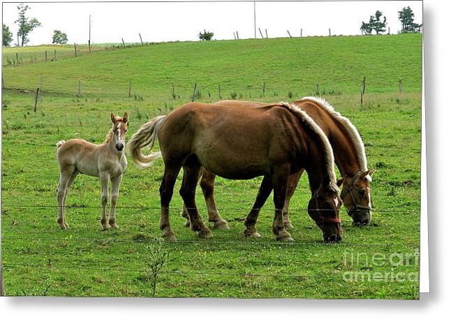 The Family Of Three. Greeting Card by Penny Neimiller