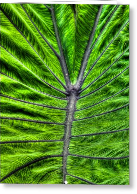 Greeting Card featuring the photograph The Fan Of The Elephant Ear by Dennis Dame