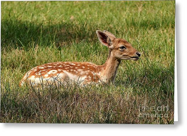 The Fawn Greeting Card by Kathy Baccari
