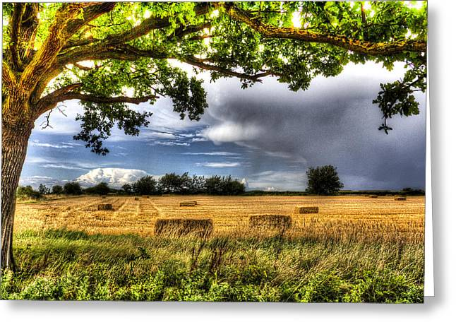 The Field Beyond The Tree Greeting Card by David Pyatt