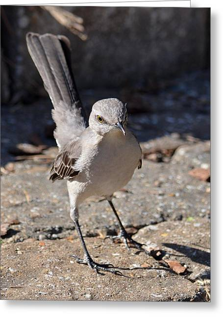 The Fiesty Catbird Greeting Card by Maria Urso