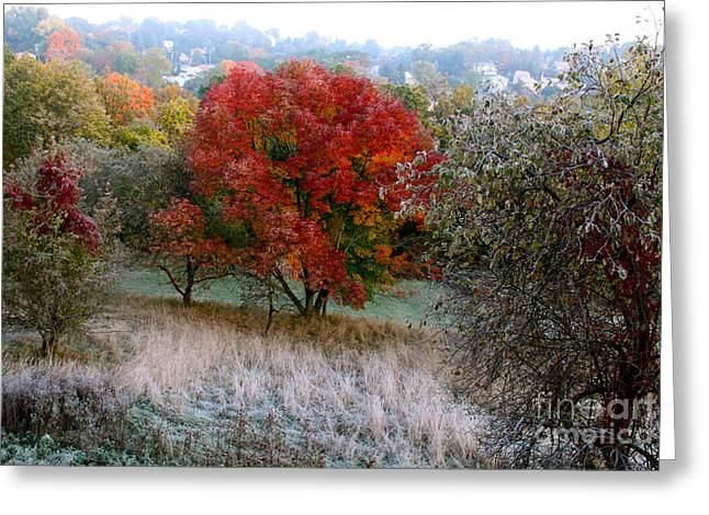 The First Frost Greeting Card by Jay Nodianos