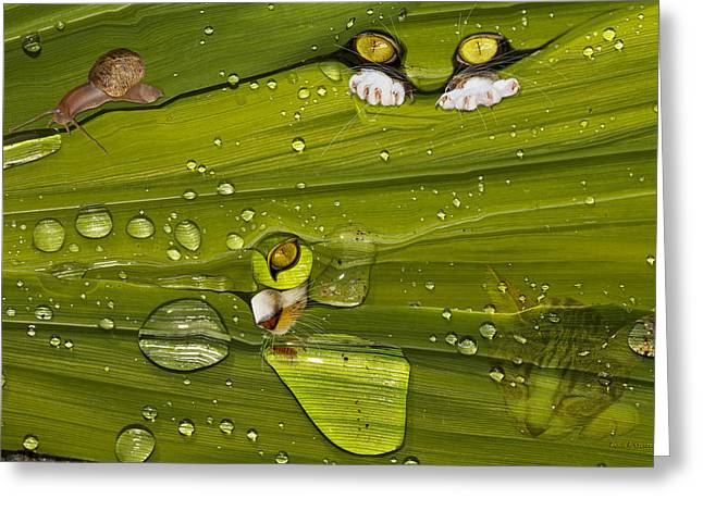 The First Rain Greeting Card by Angela A Stanton