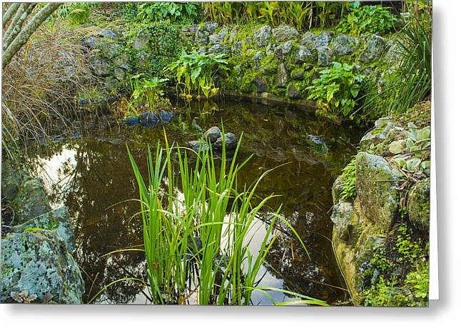 Greeting Card featuring the photograph The Fish Pond  by Naomi Burgess