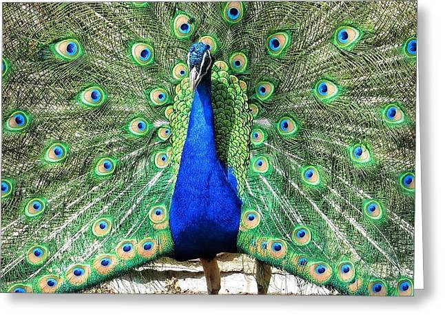 The Flirty Peacock Greeting Card