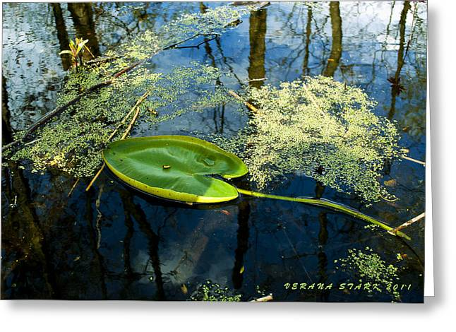 Greeting Card featuring the photograph The Floating Leaf Of A Water Lily by Verana Stark