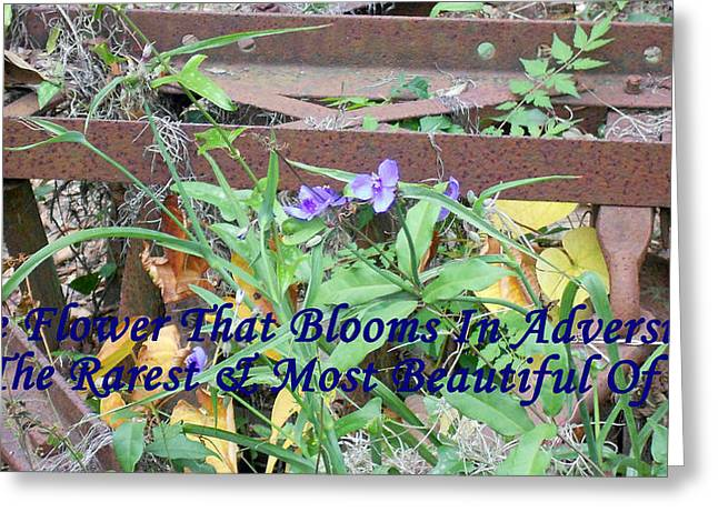 The Flower That Blooms In Adversity  Greeting Card
