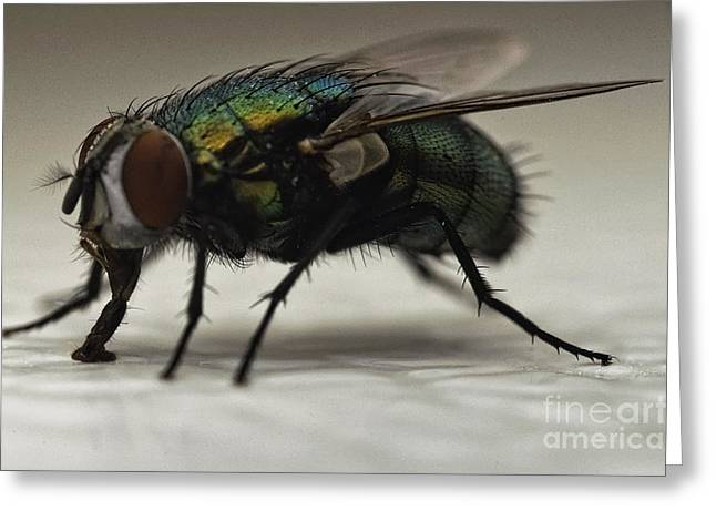The Fly Macro Greeting Card by Michael Ver Sprill