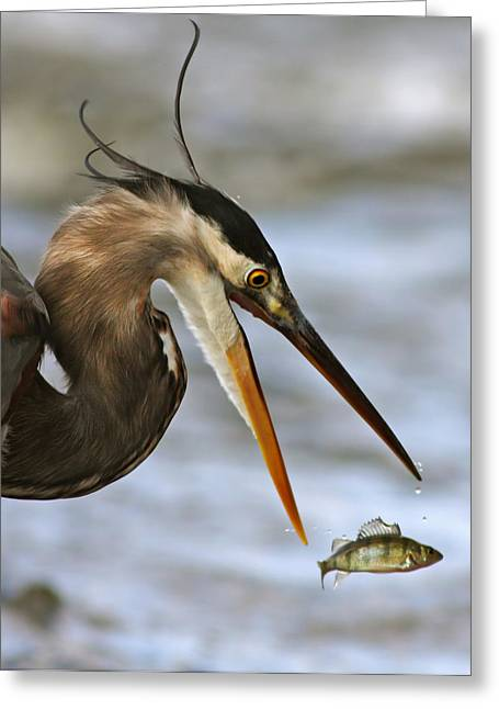 The Flying Fish Greeting Card by Mircea Costina Photography