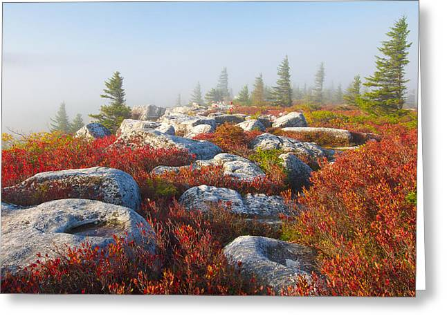The Fog Clears At Dolly Sods Greeting Card by Bill Swindaman