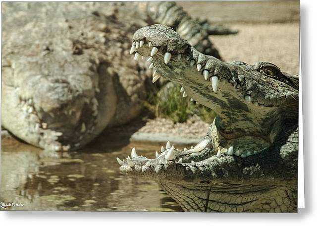 Greeting Card featuring the photograph The Fool Crocodile by Stwayne Keubrick