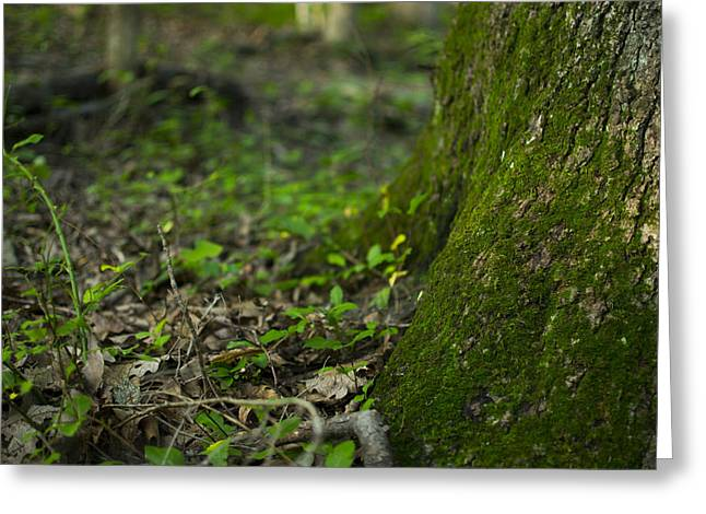 The Foot Of A Tree Greeting Card by Michael Williams