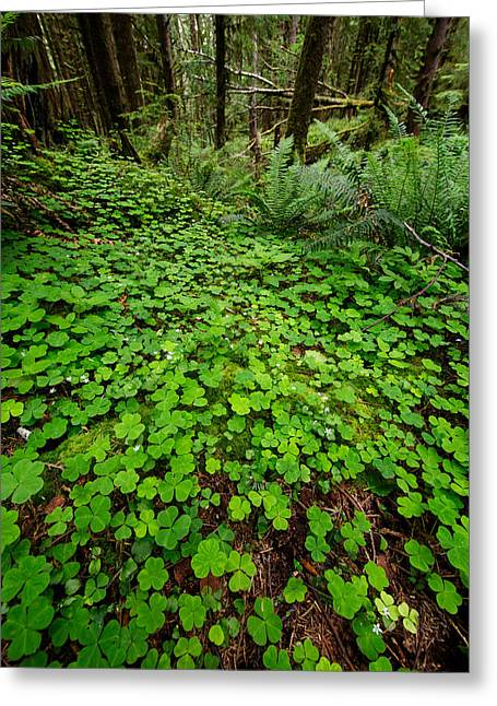 The Forest Floor Greeting Card by Rick Berk