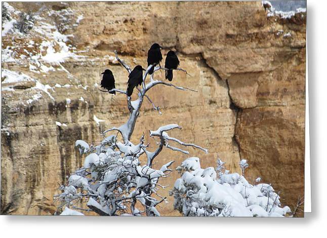 Greeting Card featuring the photograph The Four Crows by Laurel Powell