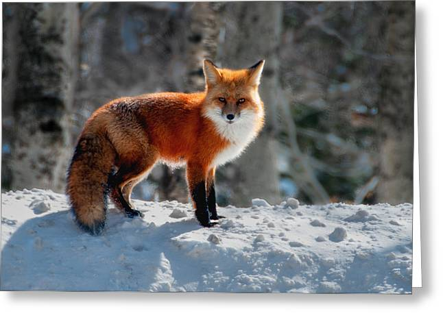 The Fox 3 Greeting Card