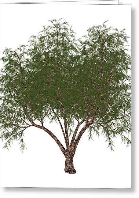 The French Tamarisk Tree Greeting Card