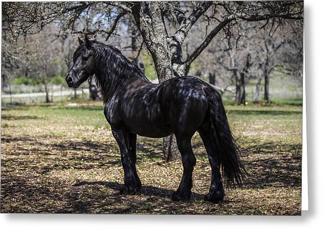 The Friesian Stallion Eros Greeting Card