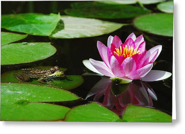 The Frog And The Lily Greeting Card by Janice Adomeit