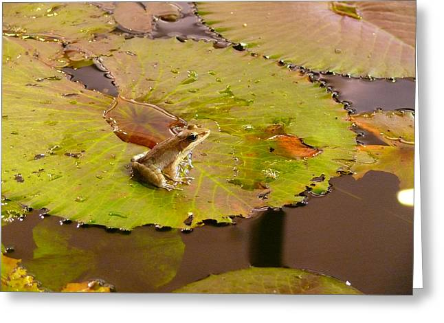 The Frog Greeting Card by Evelyn Tambour