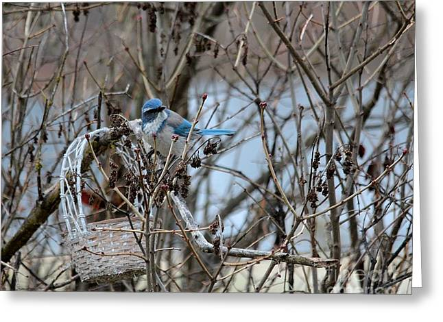 Greeting Card featuring the photograph The Gathering Blue Jay by Marjorie Imbeau
