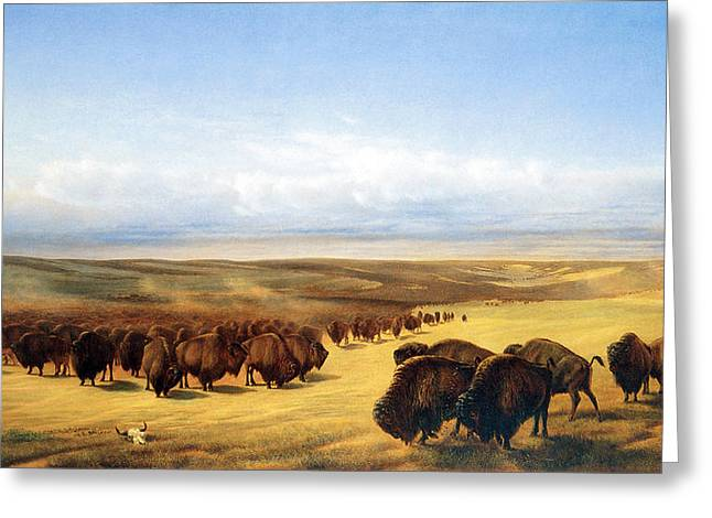 The Gathering Of The Herds Greeting Card by William Jacob Hays