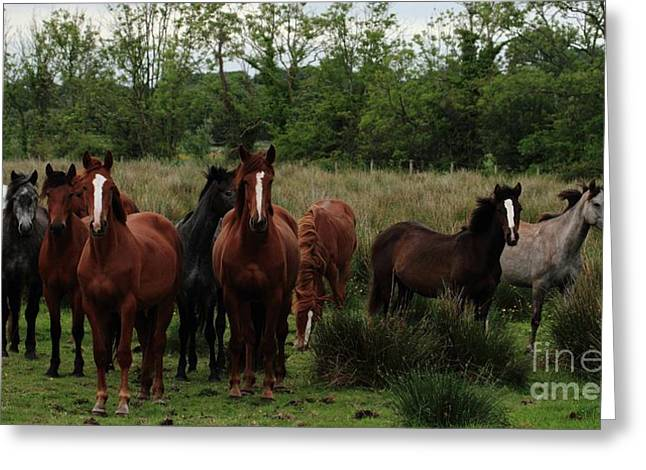 The Gathering Greeting Card by Peter Skelton