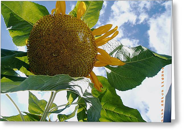 Greeting Card featuring the photograph The Gigantic Sunflower by Verana Stark
