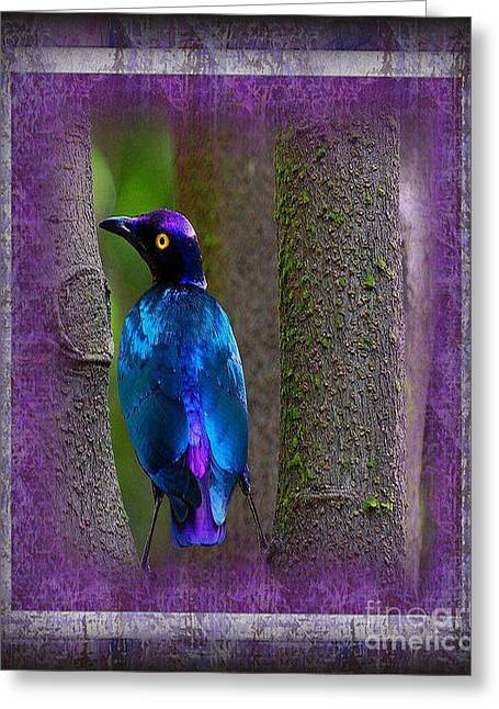 The Glorious Purple Glossy Starling Greeting Card by Don Melton