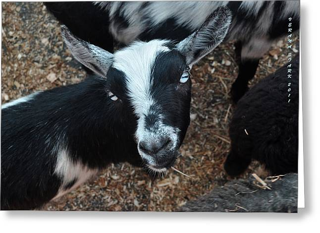 Greeting Card featuring the photograph The Goat With The Gorgeous Eyes by Verana Stark