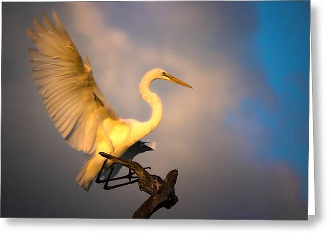 The Golden Egret Greeting Card