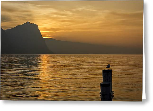 The Golden Hour Greeting Card by Kim Andelkovic