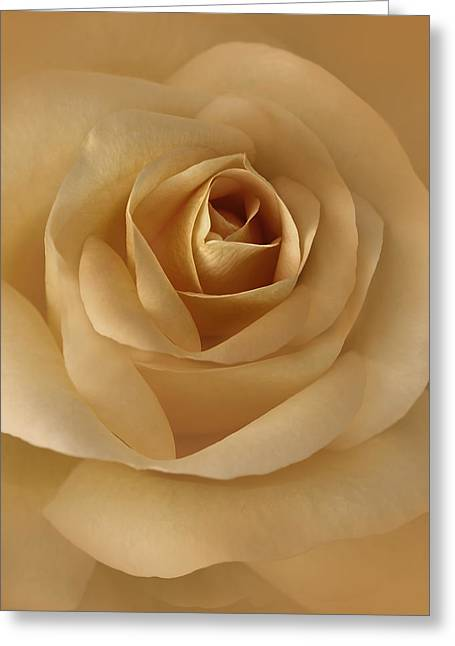 The Golden Rose Flower Greeting Card by Jennie Marie Schell