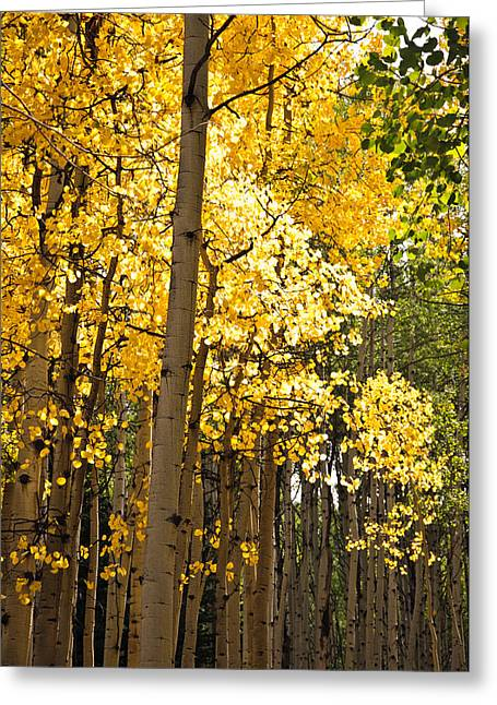Greeting Card featuring the photograph The Golden Tree by Eric Rundle