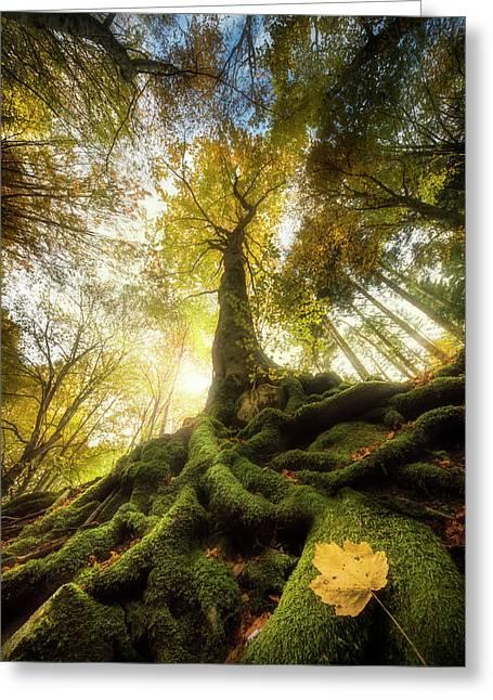 The Goodbye Of A Leaf Greeting Card