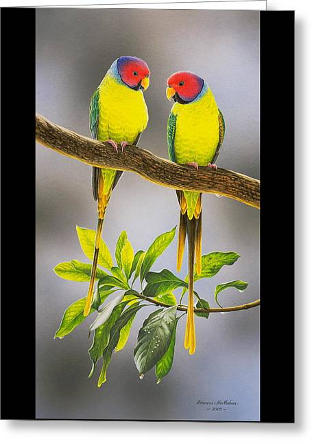 The Gorgeous Guys - Plum-headed Parakeets Greeting Card