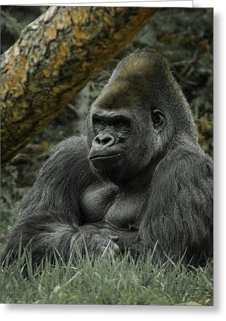 The Gorilla 3 Greeting Card by Ernie Echols