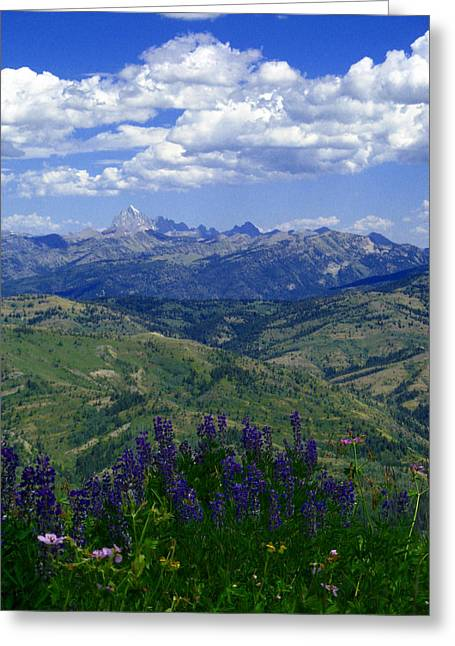 Greeting Card featuring the photograph The Grand And Lupines by Raymond Salani III