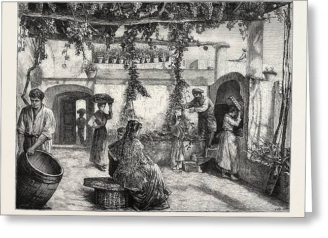 The Grape Harvest In Italy Greeting Card