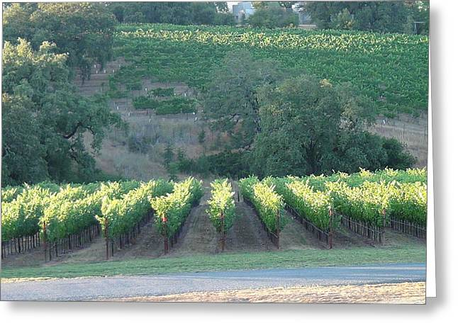 Greeting Card featuring the photograph The Grape Lines by Shawn Marlow
