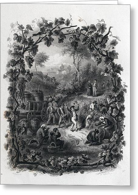 The Grapes Harvest In France Greeting Card