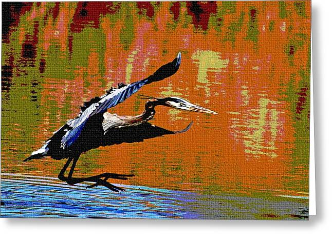 Greeting Card featuring the photograph The Great Blue Heron Jumps To Flight by Tom Janca