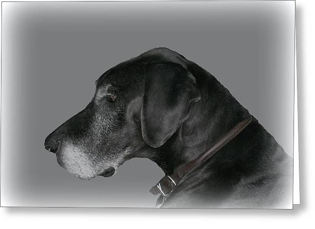 The Great Dane Greeting Card by Barbara S Nickerson