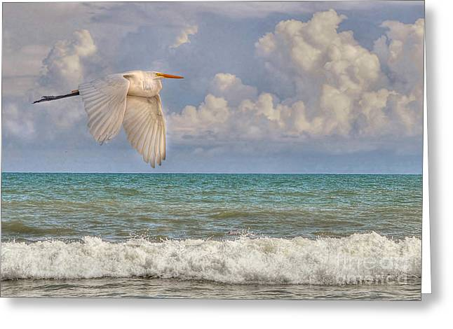 The Great Egret And The Ocean Greeting Card
