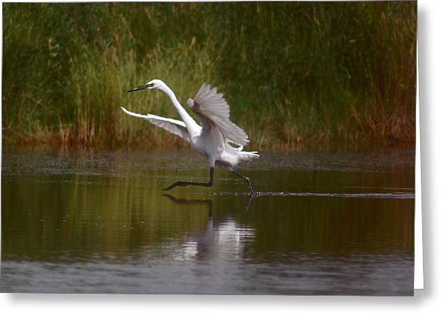 Greeting Card featuring the photograph The Great Egret by Leticia Latocki