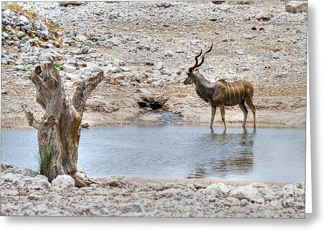 Greeting Card featuring the photograph The Great Kudu  by Juergen Klust