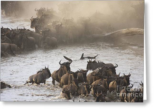 Greeting Card featuring the photograph The Great Migration  by Chris Scroggins