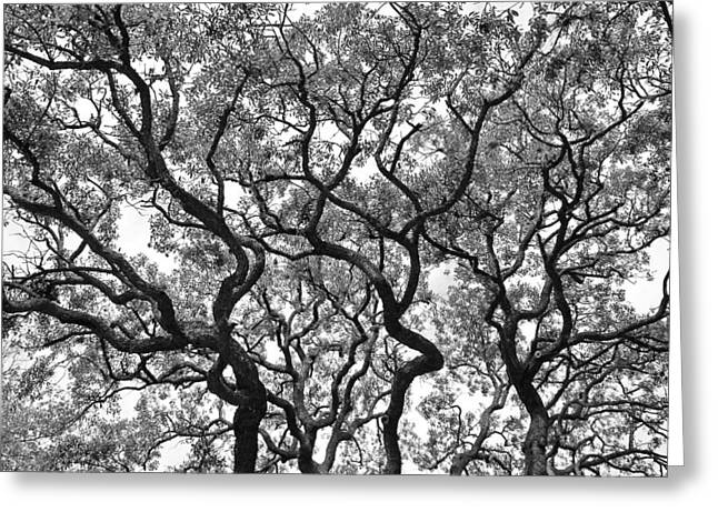 The Great Oak In Black And White Greeting Card