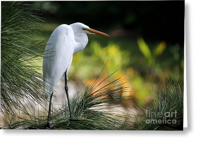 The Great White Egret Greeting Card by Sabrina L Ryan